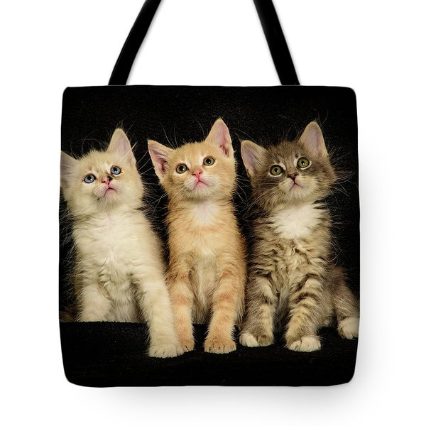 Three Wee Kittens Tote Bag