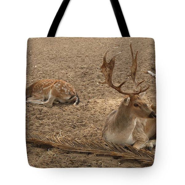 Three Deer Resting Tote Bag