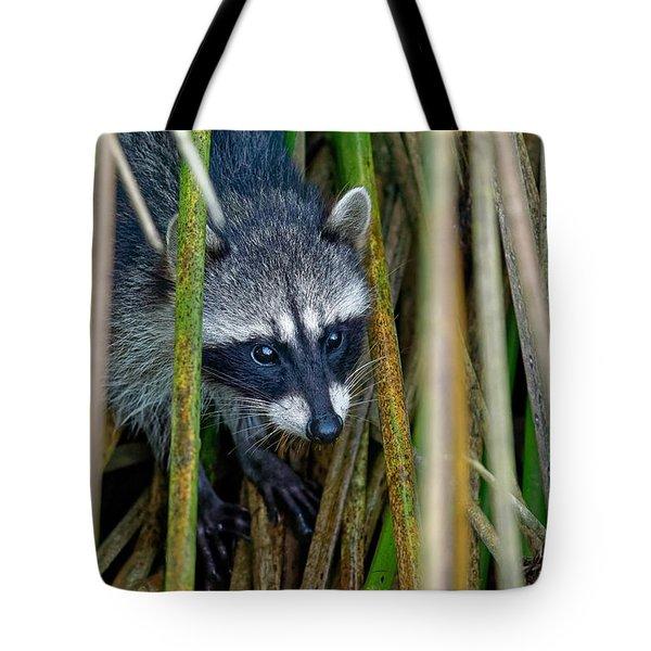 Through The Reeds - Raccoon Tote Bag