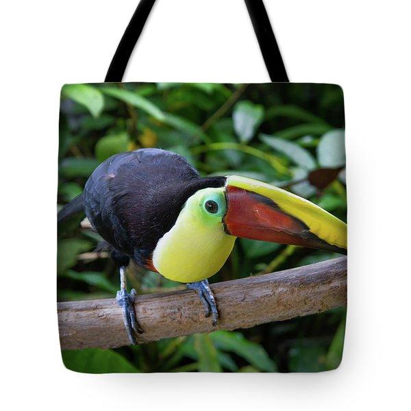 Tico Toucan Tote Bag