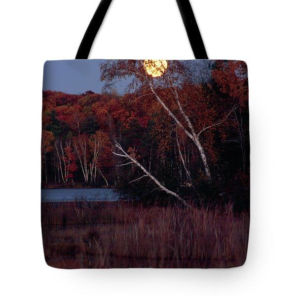 Tiger Cat Moonrise Tote Bag
