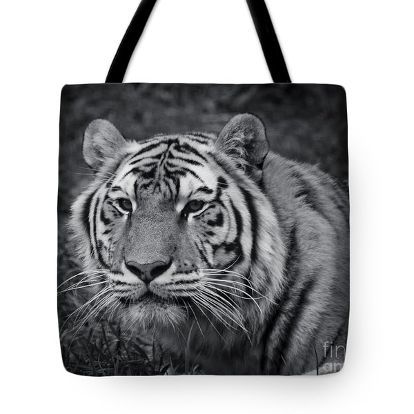 Tiger In The Grass Tote Bag by Darcy Michaelchuk