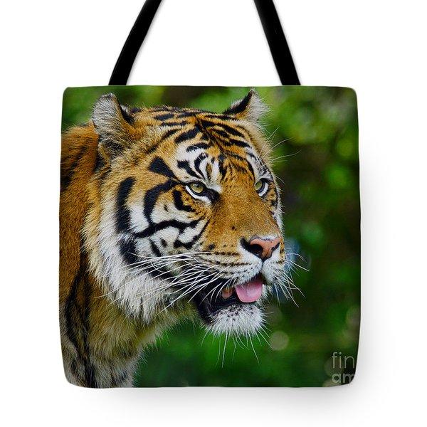 Tiger Portrait Tote Bag by Larry Nieland