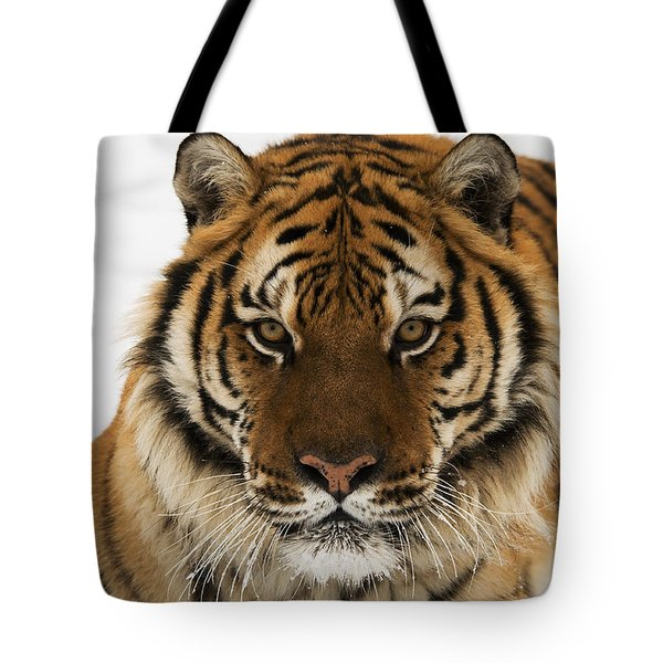 Tiger Stare Tote Bag