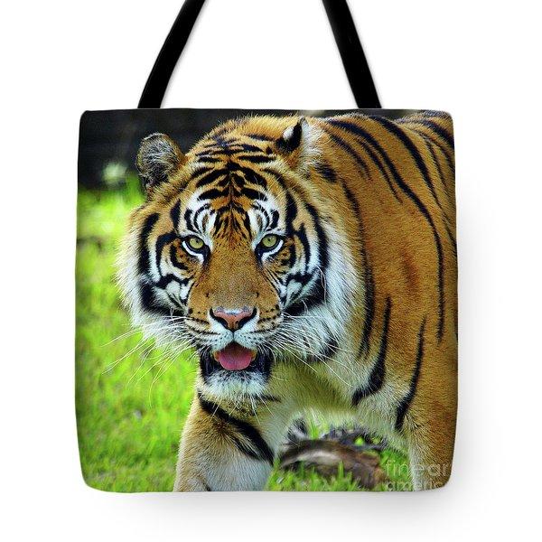 Tiger The Stare Tote Bag