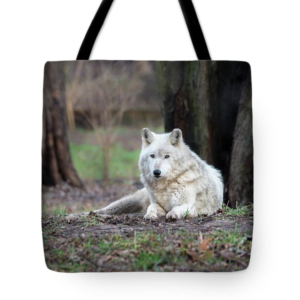 Tote Bag featuring the photograph Timber Wolf by Andrea Silies