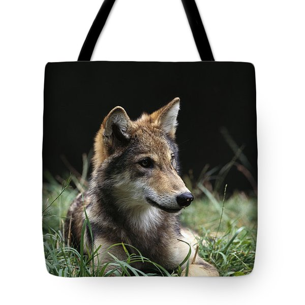 Timber Wolf Canis Lupus Portrait Tote Bag