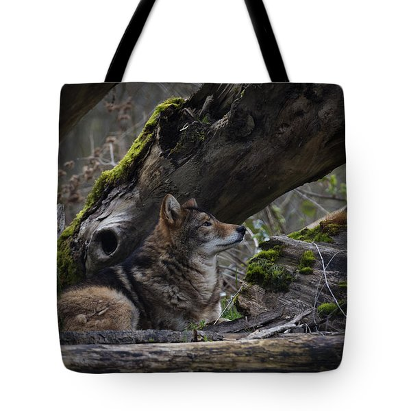 Timber Wolf Tote Bag by Randy Hall