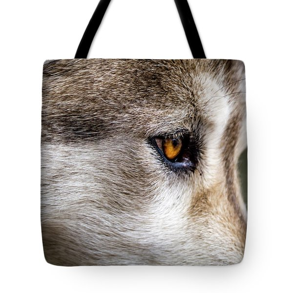 Tote Bag featuring the photograph Timber Wolf Stare by Teri Virbickis