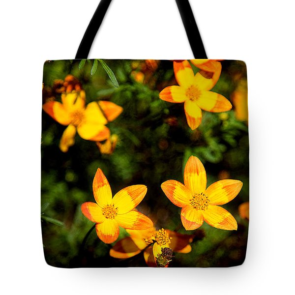 Tiny Suns Tote Bag