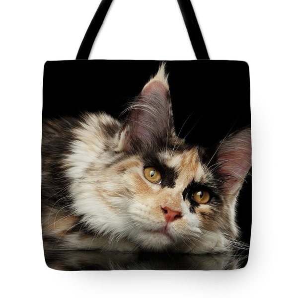 Tired Maine Coon Cat Lie On Black Background Tote Bag