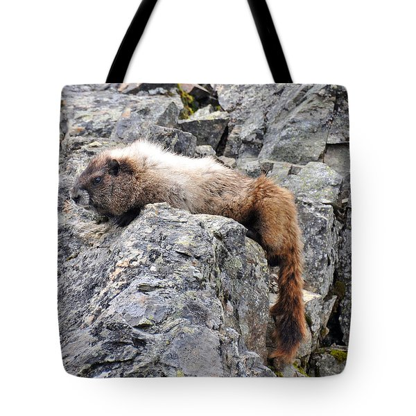 Tired Marmot Tote Bag by Rebecca Parker