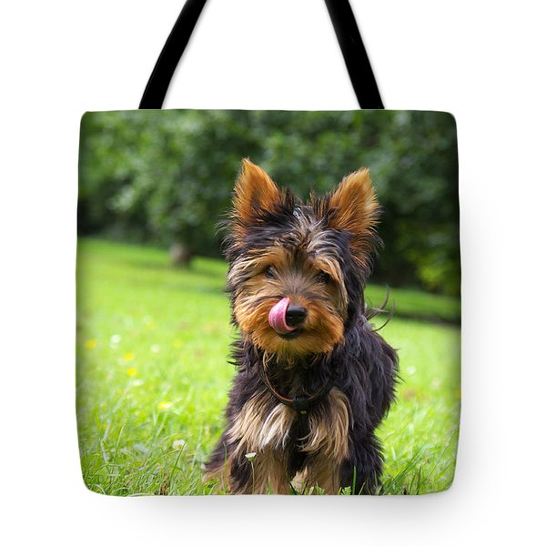 Toby In The Startup ...  Tote Bag by Angela Doelling AD DESIGN Photo and PhotoArt