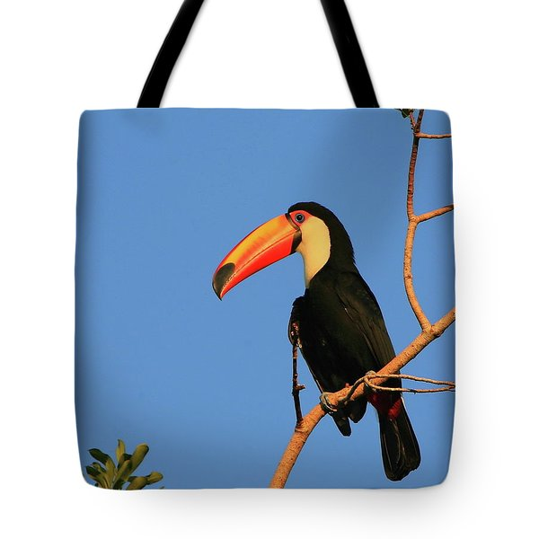 Toco Toucan Tote Bag by Bruce J Robinson