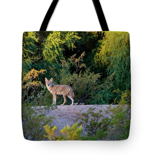 Today's Coyote Tote Bag