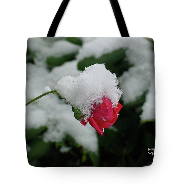 Too Soon Winter - Red Rose  Tote Bag by Shirley Heyn