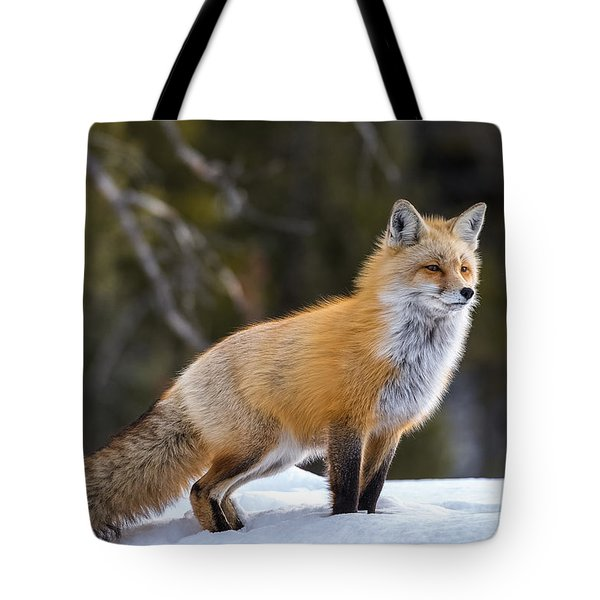 Tote Bag featuring the photograph Totally Foxy by Yeates Photography