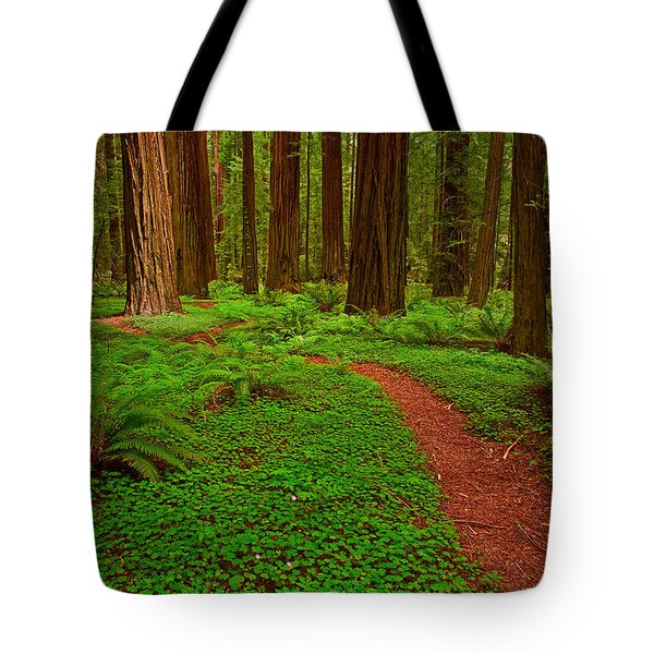 Trail Through The Redwoods Tote Bag
