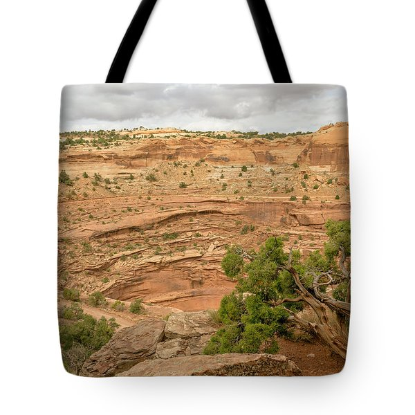 Tree And Shafer Trail Tote Bag