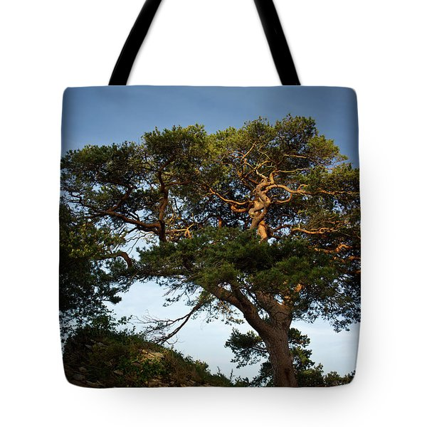 Tree At Maccarthy Mor Castle Tote Bag by Douglas Barnett