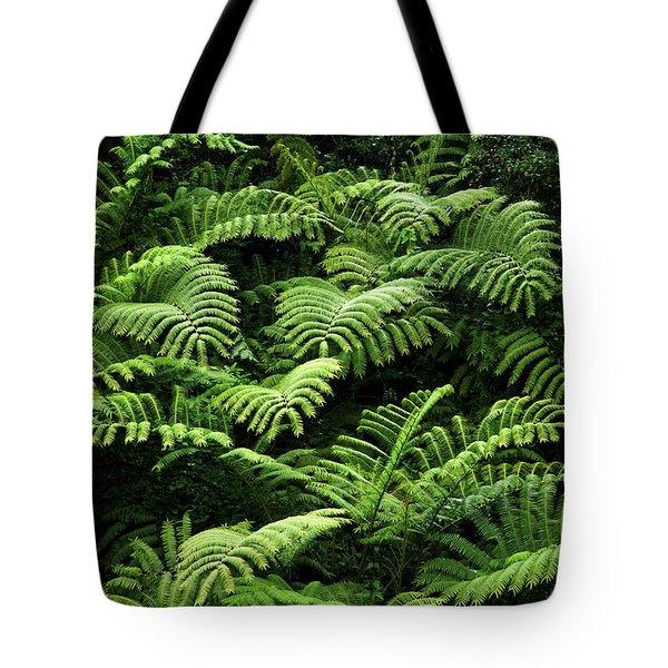 Tree Ferns Tote Bag