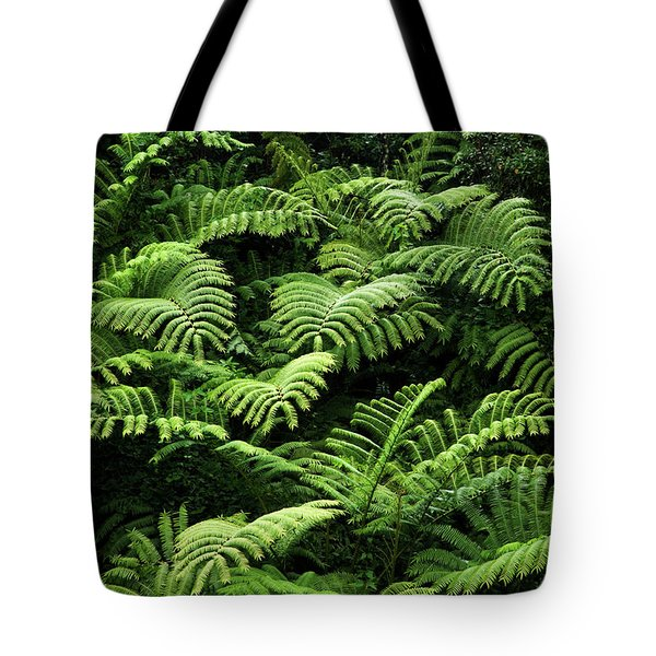 Tote Bag featuring the photograph Tree Ferns by Charmian Vistaunet