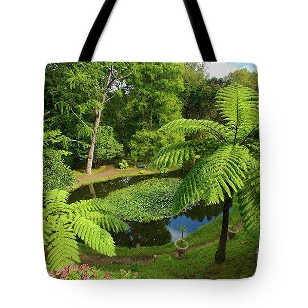 Tree Ferns Tote Bag by Gaspar Avila