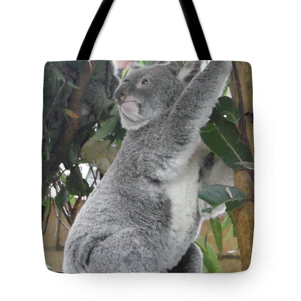 Tree Hug Tote Bag
