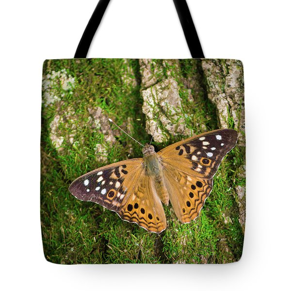 Tote Bag featuring the photograph Tree Hugger by Bill Pevlor
