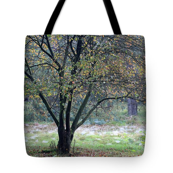 Tree In Forest With Autumn Colors Tote Bag