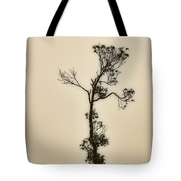 Tree In The Mist Tote Bag by Rajiv Chopra