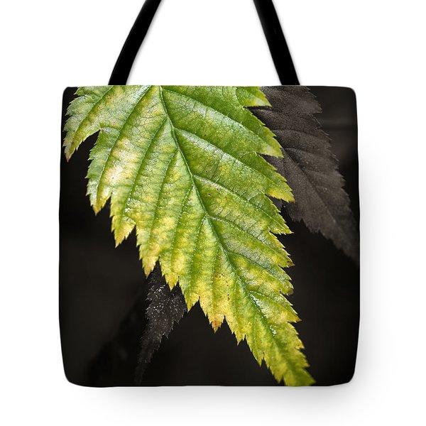 Tree Leaf Study  Tote Bag