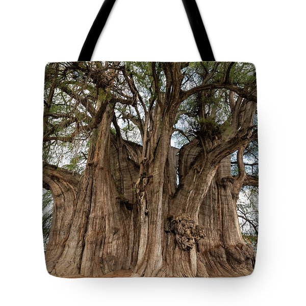 Tree Of Tule In Mexico Tote Bag