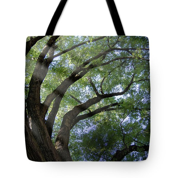 Tote Bag featuring the photograph Tree Rays by Brian Jones