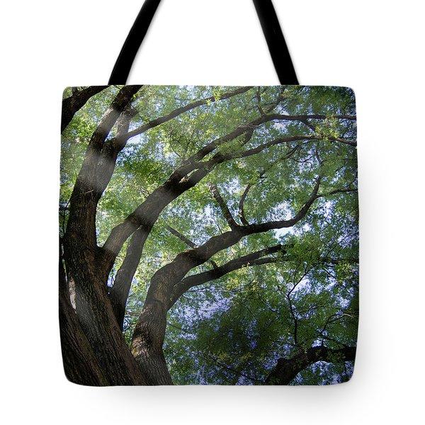 Tree Rays Tote Bag