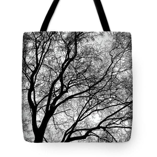 Tree Silhouette Series 1 Tote Bag