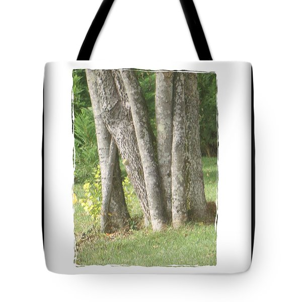 Tree Trunks Tote Bag by Shirley Moravec