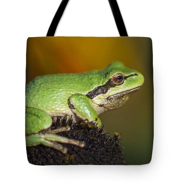 Treefrog On Rudbeckia Tote Bag