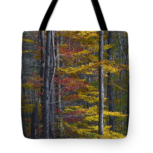 Trees With Autumn Colors 8260c Tote Bag