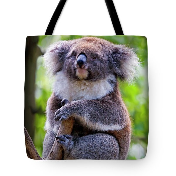 Treetop Koala Tote Bag by Mike  Dawson