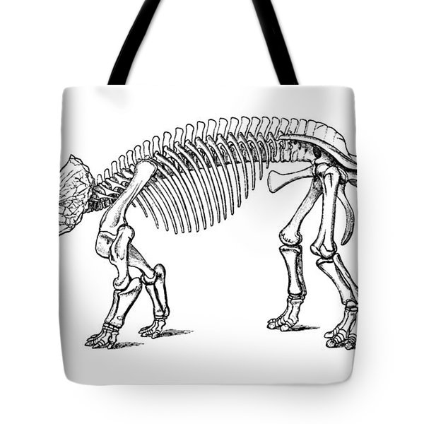 Triceratops Prorsus Tote Bag by Science Source
