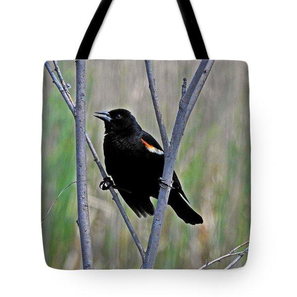 Tricolored Blackbird Tote Bag
