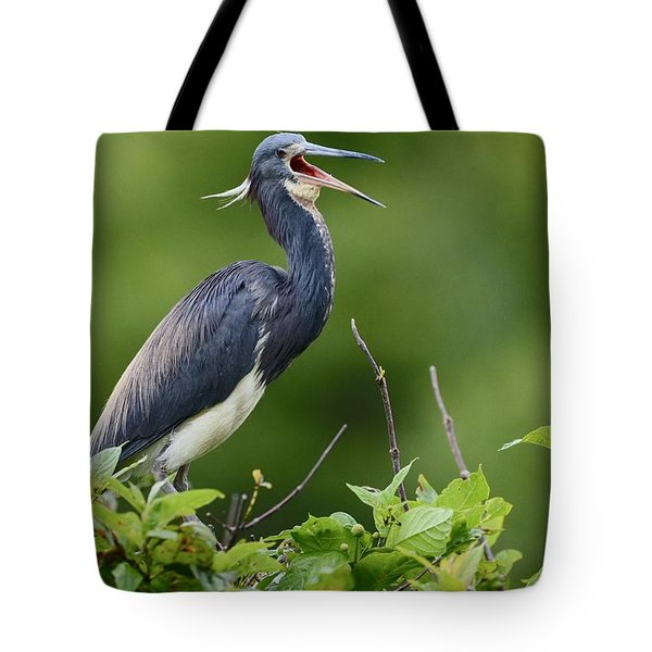Tote Bag featuring the photograph Tricolored Herons Call by Kathy Gibbons