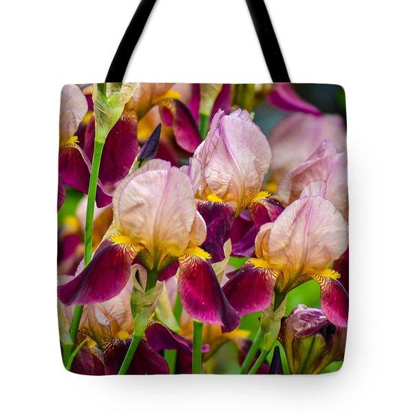 Tricolored Irisses Tote Bag