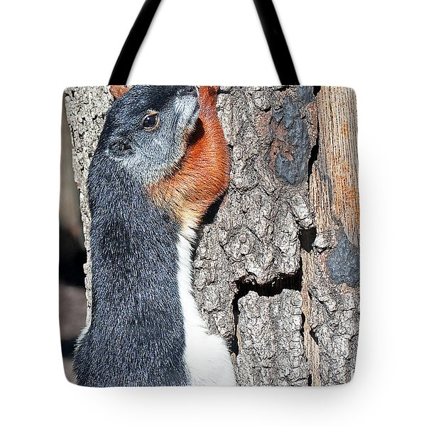 Tricolored Squirrel Tote Bag by Kenneth Albin