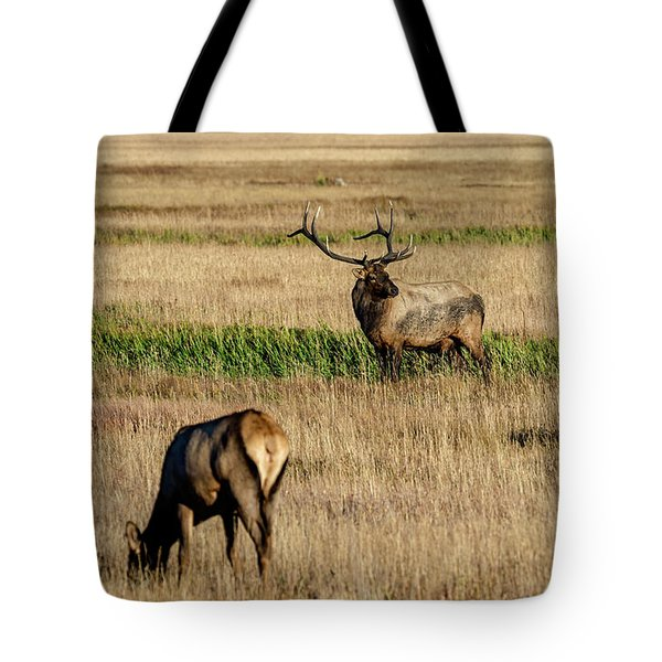 Tote Bag featuring the photograph Trifecta by Bitter Buffalo Photography