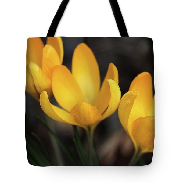 Tote Bag featuring the photograph Triplets by Connie Handscomb