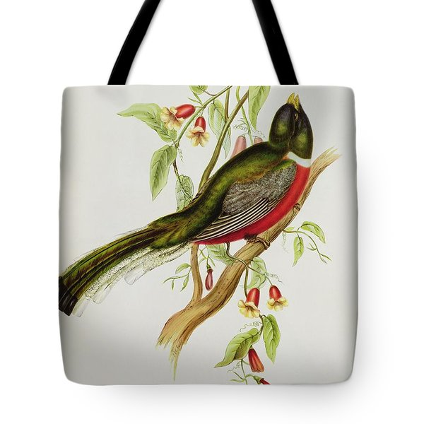 Trogon Ambiguus Tote Bag by John Gould