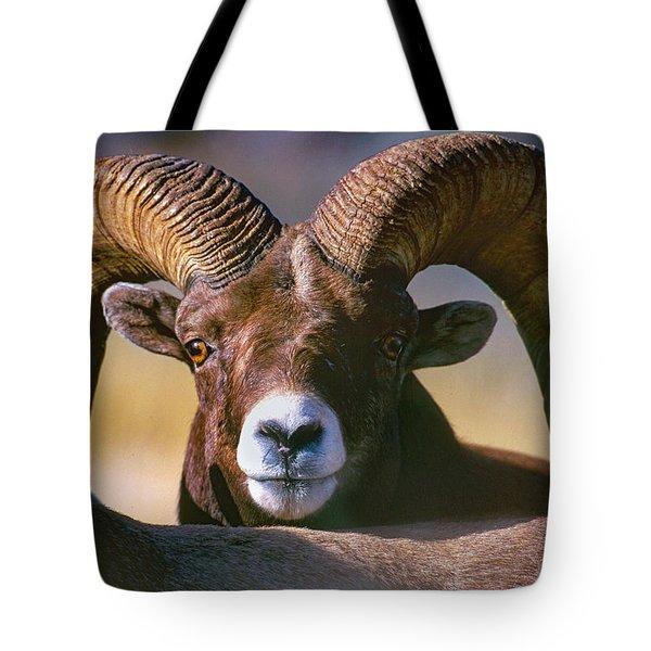 Trophy Bighorn Ram Tote Bag