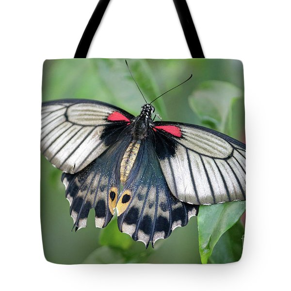 Tropical Butterfly Tote Bag